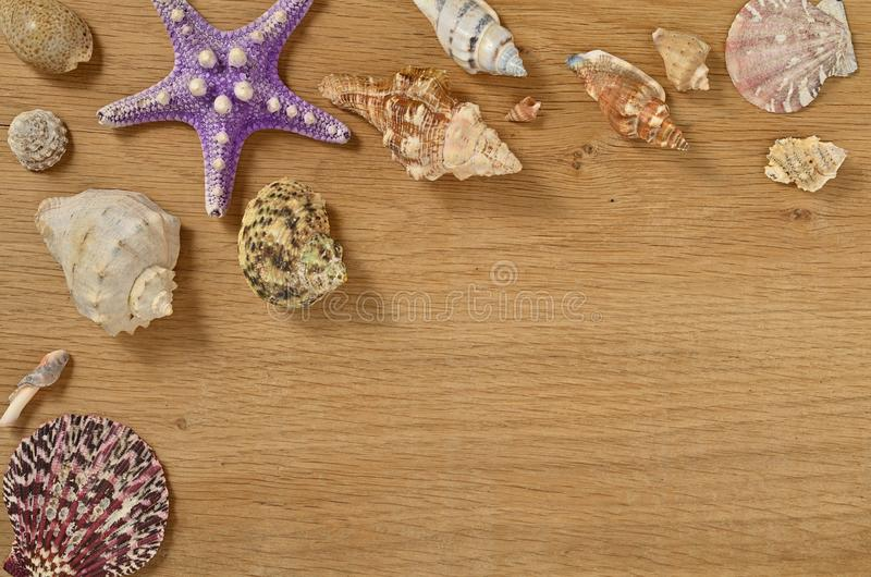 Mollusks on wooden table close up. Seashells on an old wooden table with copy space for text. Scallop shell from the black sea stock photo