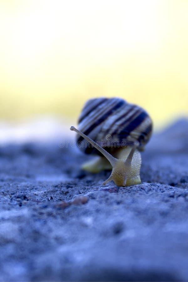 Mollusque de terre d'escargot image stock