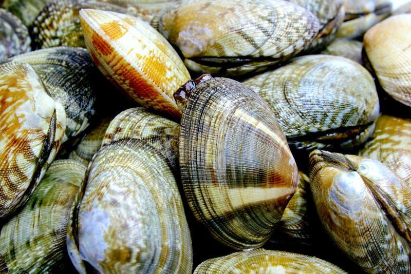 Mollusques et crustacés photos libres de droits