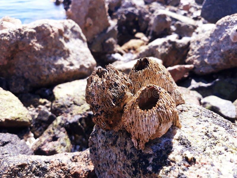 mollusques et crustacés de ‹d'†de ‹d'†de mer sur une pierre par la mer photos libres de droits