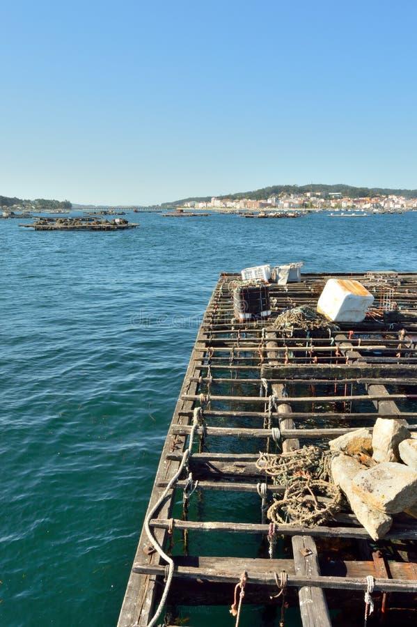 Mollusques et crustacés moissonnant dans le village du verger d'O photographie stock libre de droits