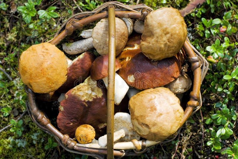Molly com cogumelos foto de stock