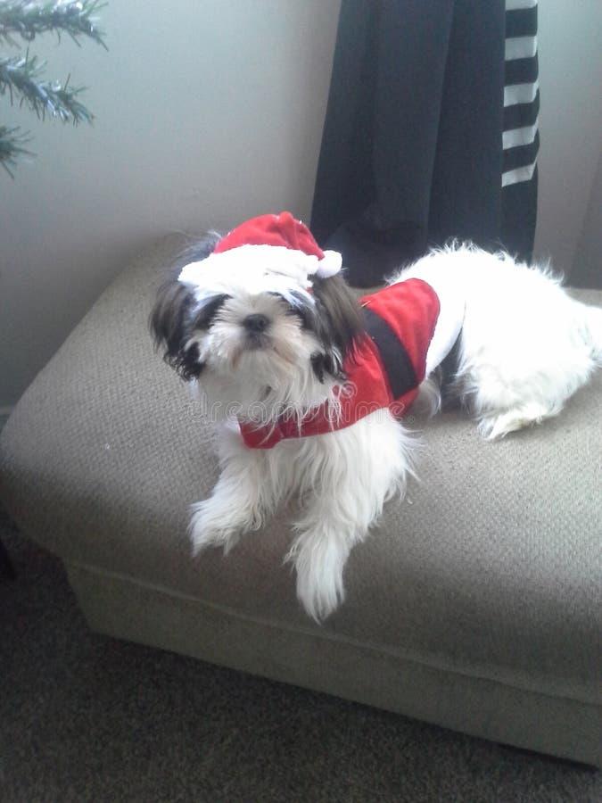 Molly en haar Kerstmis uit pasvorm stock foto's
