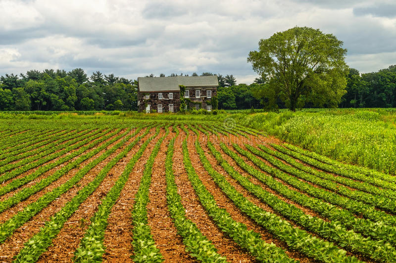 Molly Pitcher Farm. Rows of crops in front of the historic Molly Pitcher home in Freehold NJ royalty free stock image