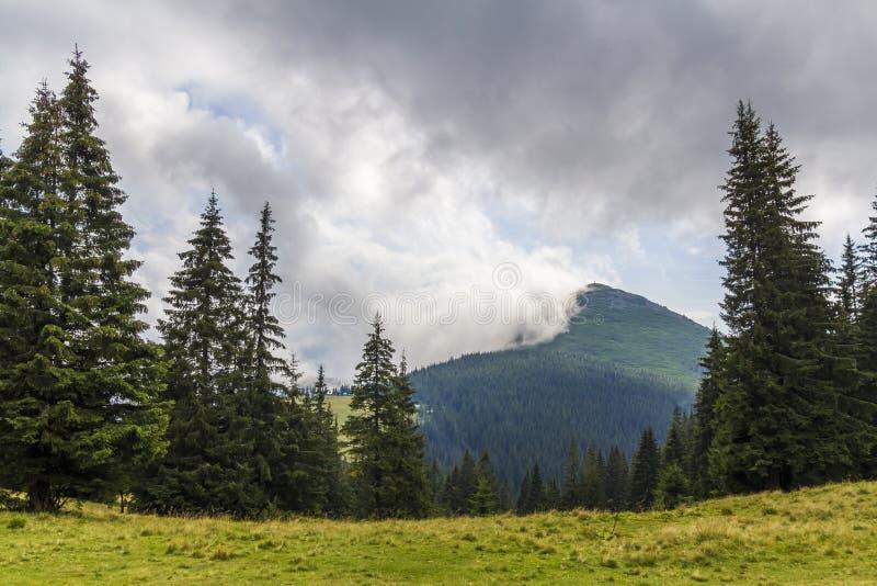 Moln över överkant av ett berg med grön pinjeskog och gräs M arkivbilder
