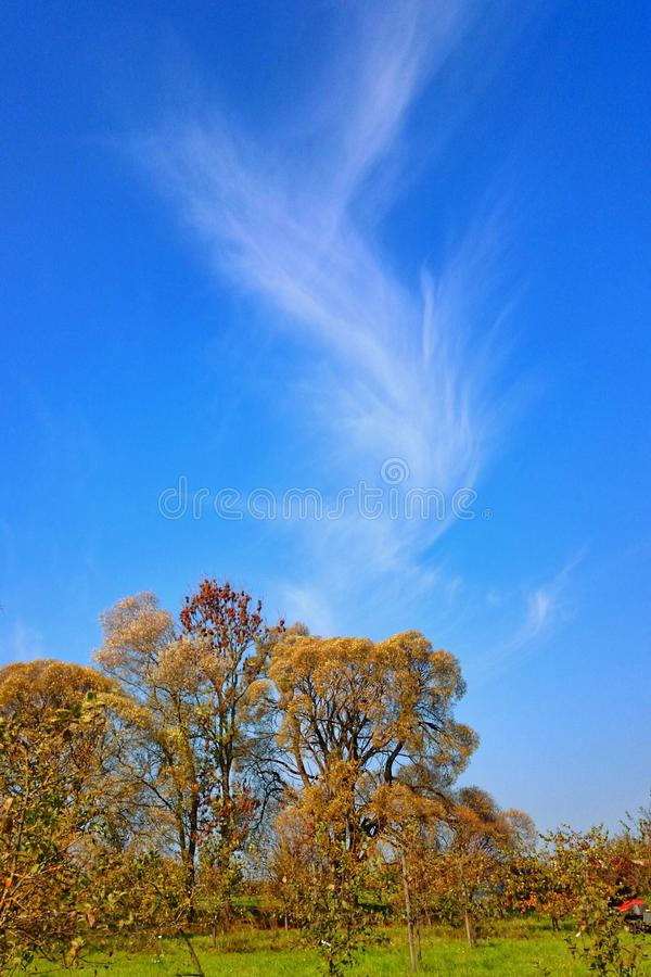 Moln för äpple för blåa träd för sommar trädgårds- royaltyfria bilder