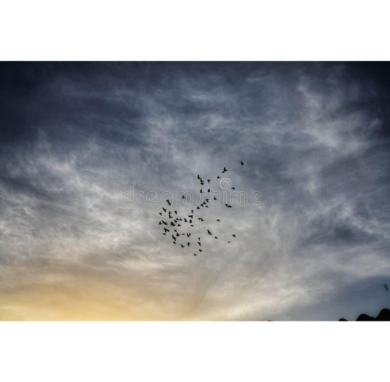 Moln, himmel & fåglar royaltyfri foto
