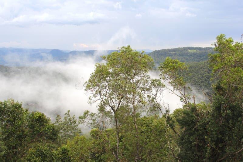 Moln i dalen i den Tamborine bergnationalparken, Australien royaltyfria bilder