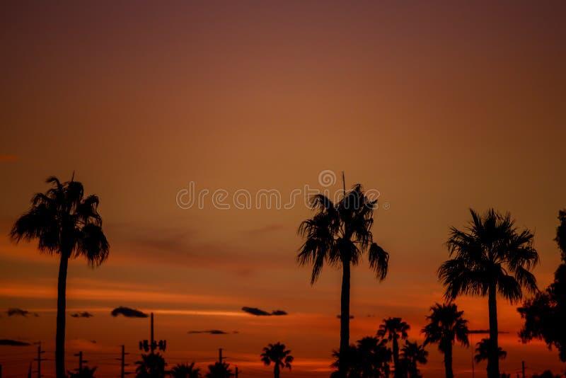 Moln med silhouetted palmträd på horisont på solnedgången royaltyfria bilder