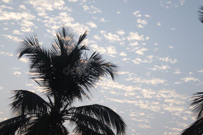 Moln med trädet fotografering för bildbyråer
