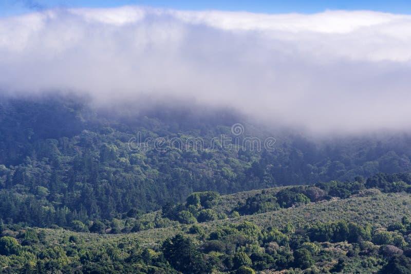 Moln och dimma som täcker kullar som täckas i vintergröna skogar och chaparral i de Santa Cruz bergen, San Mateo County, San arkivbilder