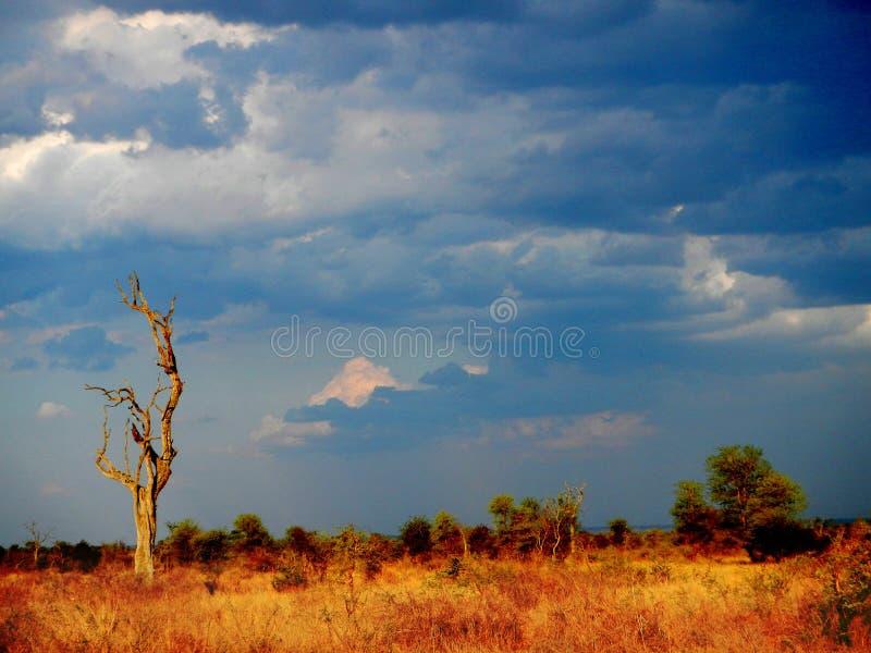 Moln och solljus för en storm, afrikansk savannah, Kruger, Sydafrika royaltyfria foton