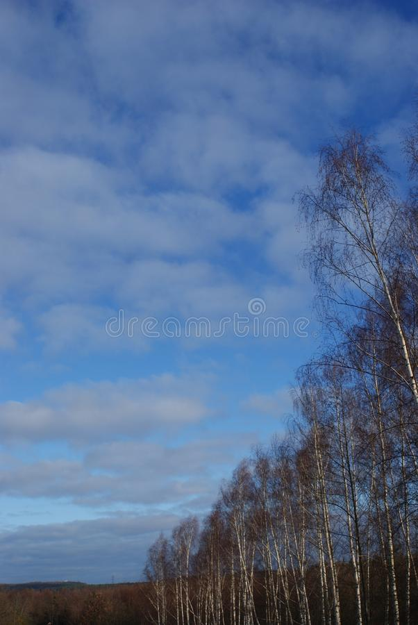 Moln på vägen för blå himmel av träd fotografering för bildbyråer