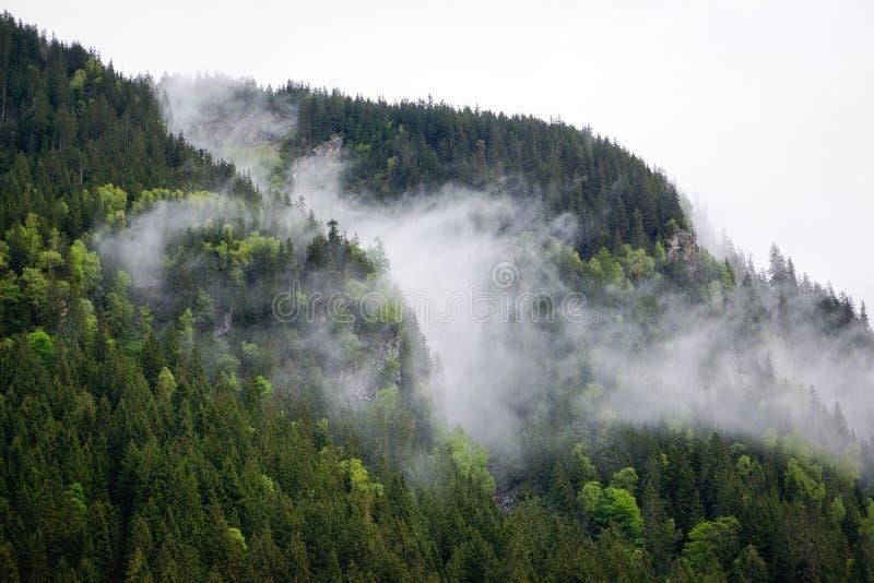 Moln som djupt hänger över skog arkivbilder