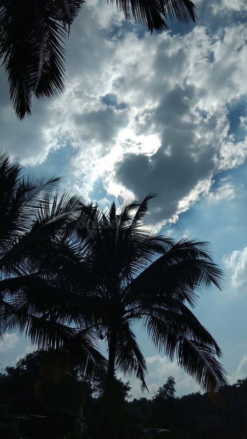 Moln som täcker solen i brett dagsljus som ses till och med kokospalmer royaltyfri foto