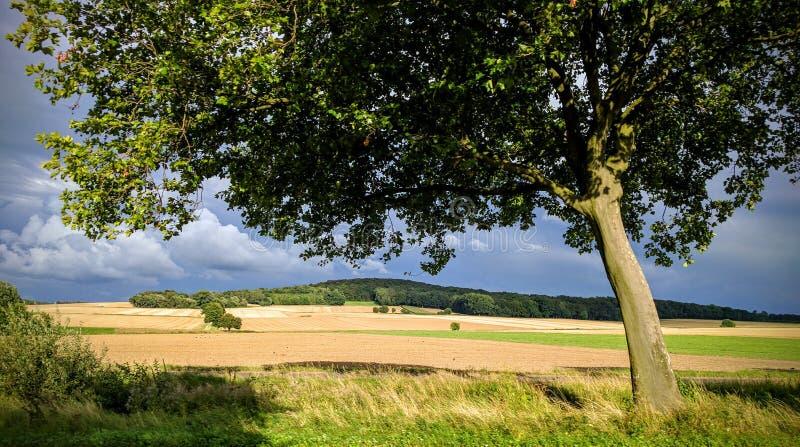 Molnig bakgrund för soligt träd arkivfoto