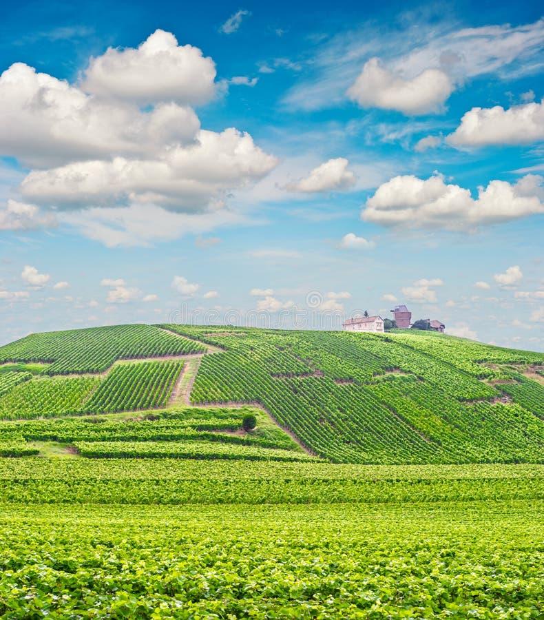 Molnig blå himmel för vingårdlandskap Champagne France arkivbild