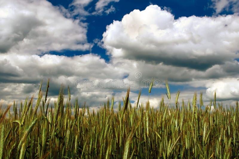 molnig fältryesky under fotografering för bildbyråer