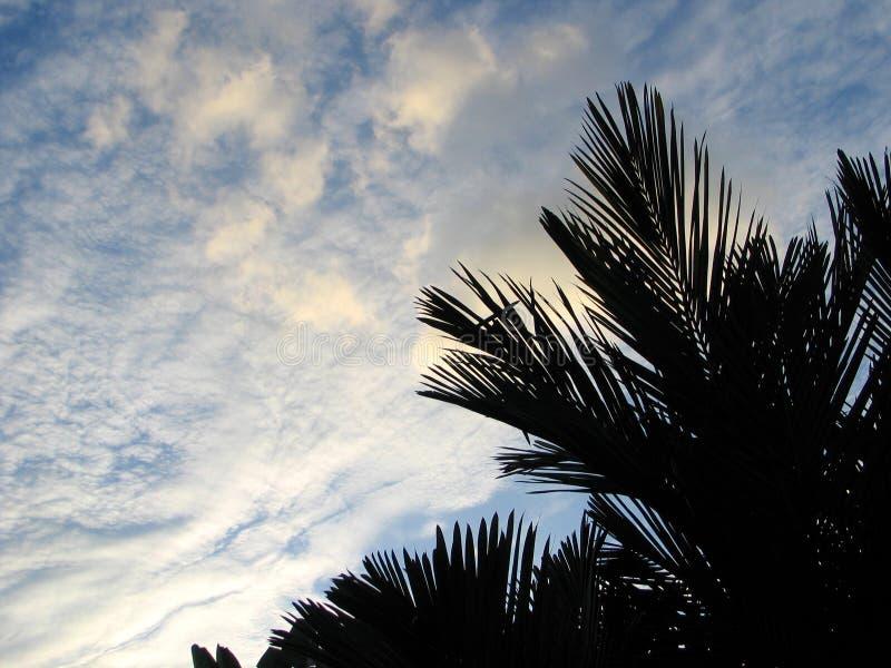 Download Molnig solnedgång arkivfoto. Bild av leaves, tropiskt, solnedgång - 26958