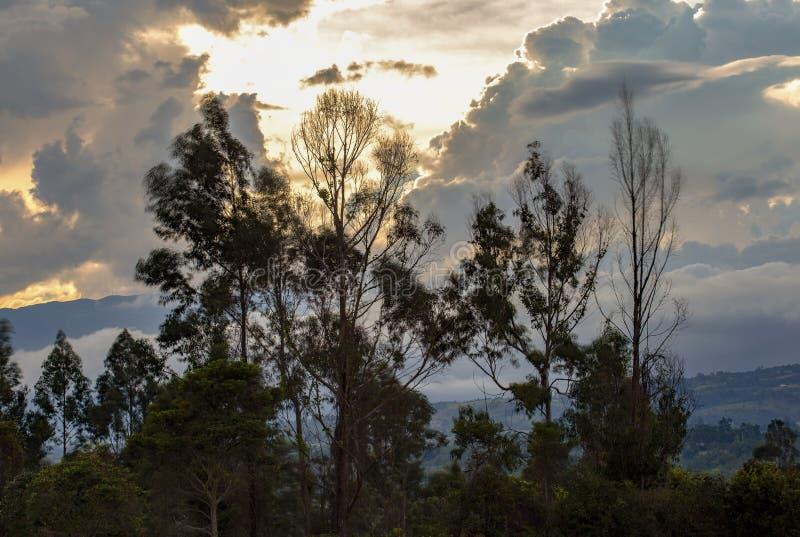 Molnig solnedgång bak eukalyptusträd arkivfoton