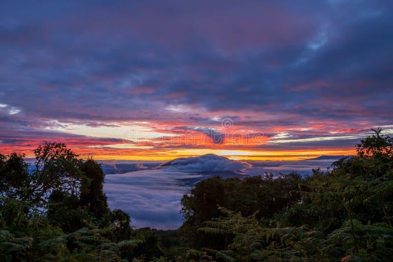 Molnig soluppgång i Tanzania mellan träden royaltyfria foton