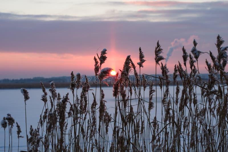 Molnig vintersolnedgång till och med det torra ogräset på floden, selektiv fokus arkivfoto
