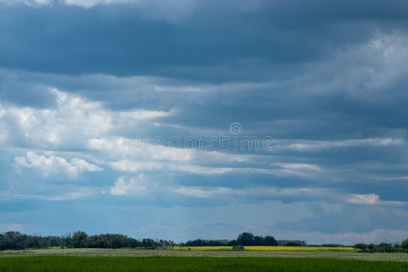 Molniga himlar ovanför canolafält, Saskatchewan, Kanada arkivbilder