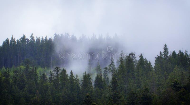Molnigt väder i ukrainaren Carpathians, dimma stiger från skogen royaltyfri foto