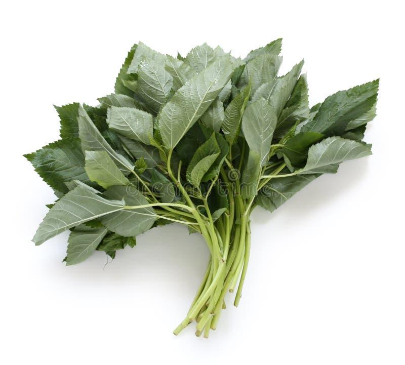 Molokhia, spinaci egiziani fotografia stock