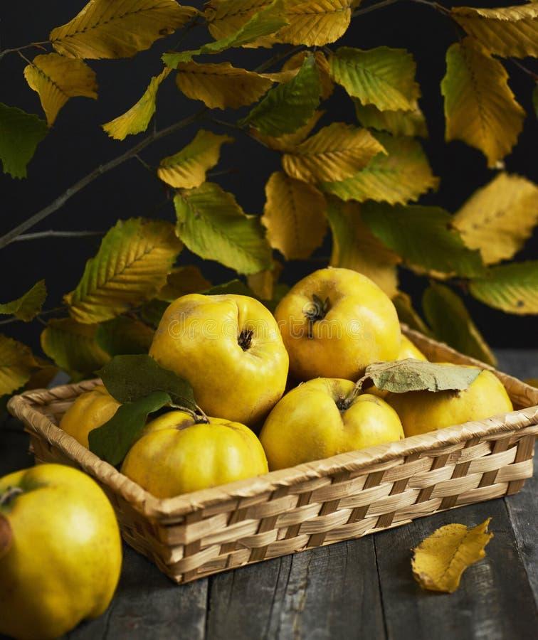 Molta cotogna della mela su fondo di legno scuro Vista superiore fotografia stock