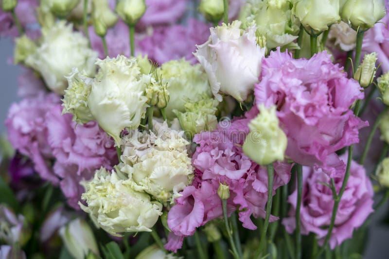 Molta forma insolita rosa dei fiori bianco delicato e porpora, primo piano immagini stock libere da diritti