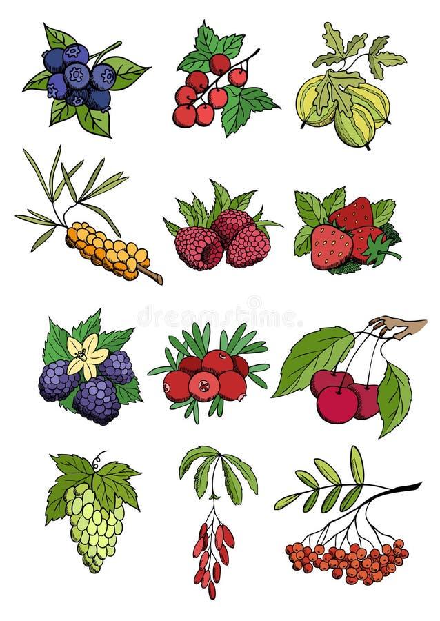 Molta parte del giardino e selvaggia di bacca illustrazione di stock