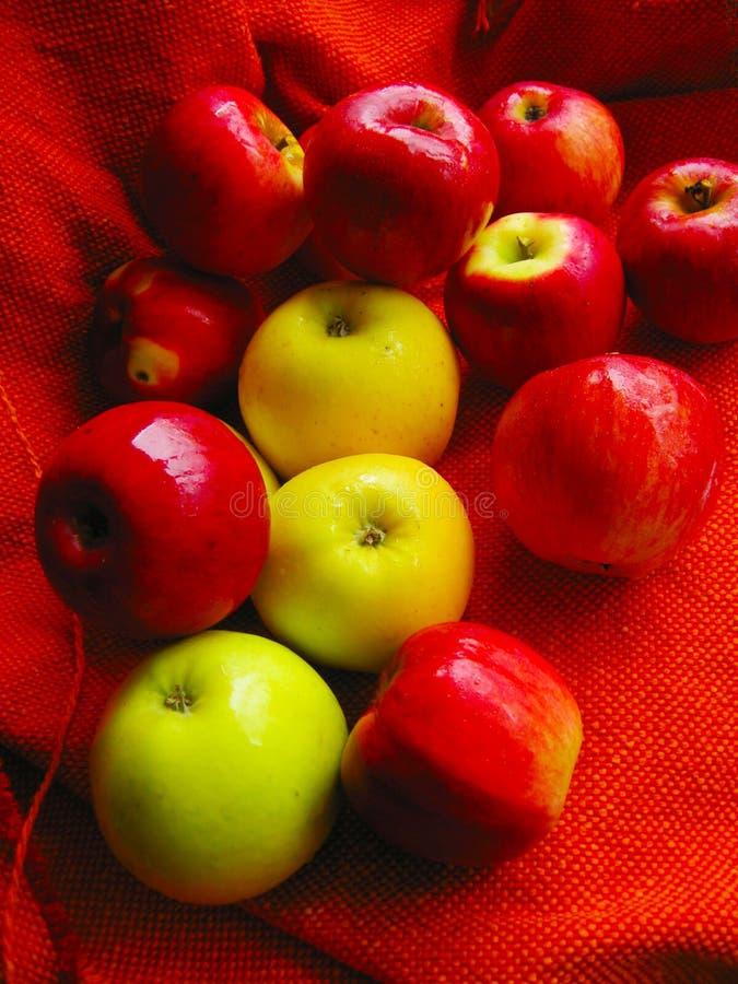 Molte belle mele gialle e rosse sull'arancia immagine stock