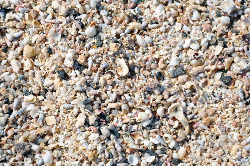 Molte conchiglie sulla spiaggia fotografia stock