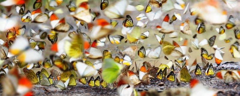 Molte farfalle fotografie stock