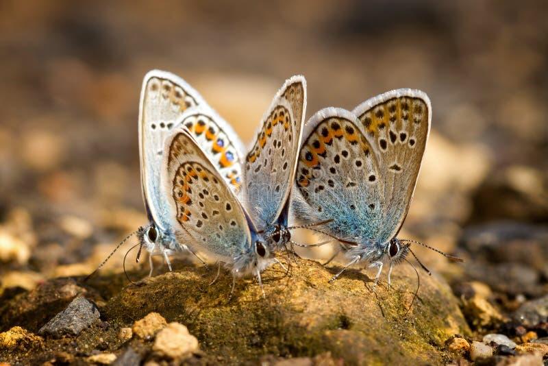 Molte farfalle mussola-alate graziose che riposano insieme immagini stock libere da diritti