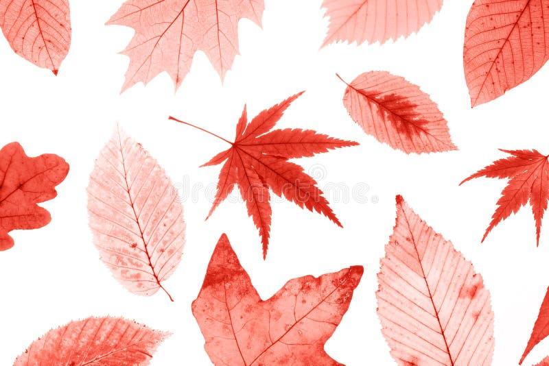 Molte foglie di autunno variopinte isolate su fondo bianco fotografia stock libera da diritti