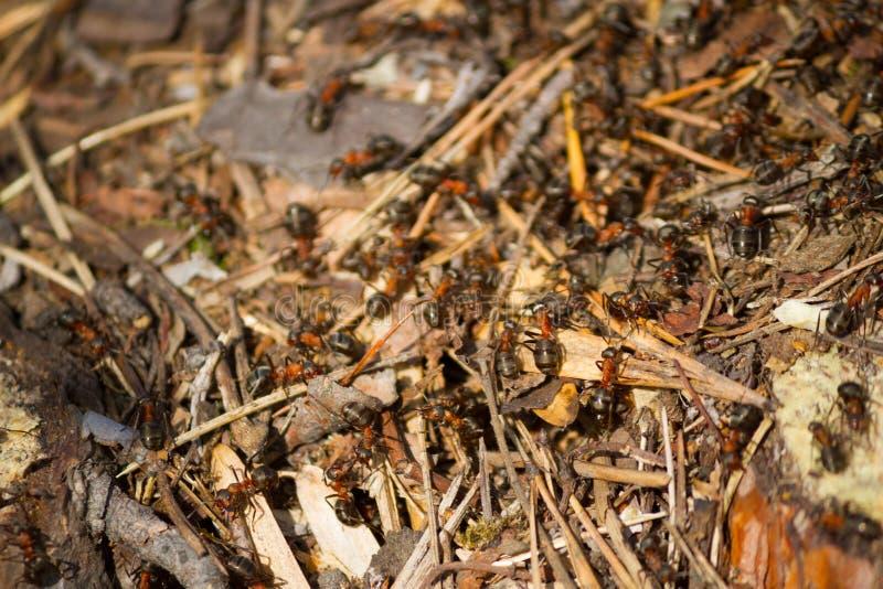 Molte formiche che lavorano insieme immagini stock libere da diritti