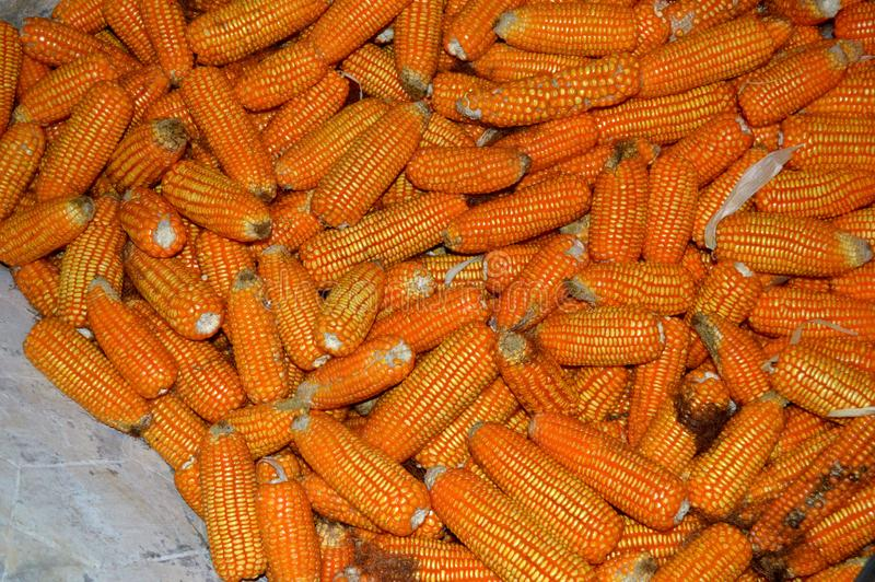 Molte foto del cereale fotografie stock
