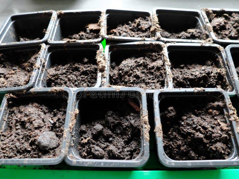 Molte scatole nere per il germoglio in un contenitore verde speciale Primo piano fotografia stock