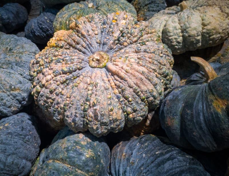 Molte zucche sono accatastate su fotografia stock libera da diritti