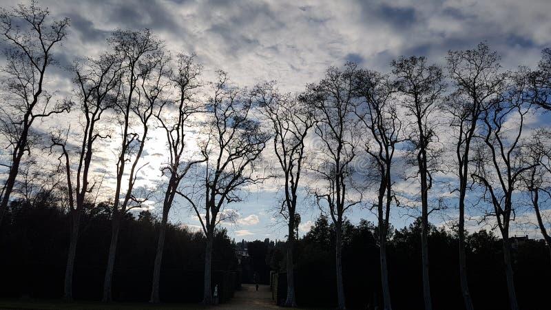 Molti alberi e cielo di sera in Boboli fanno il giardinaggio immagine stock libera da diritti