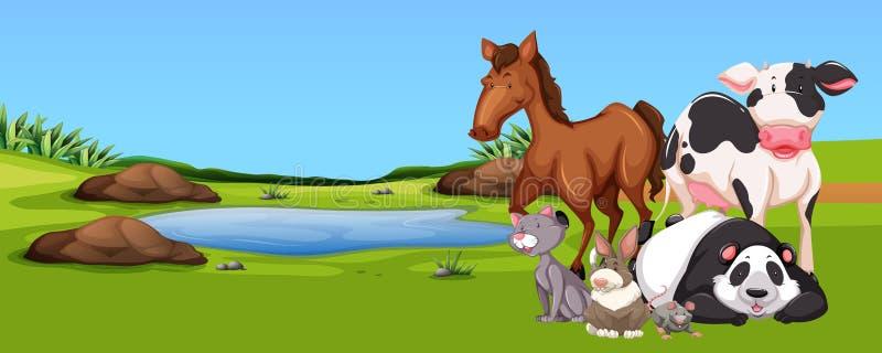 Molti animali dallo stagno illustrazione vettoriale