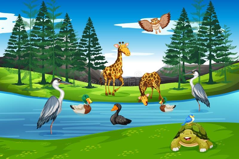 Molti animali in natura illustrazione di stock