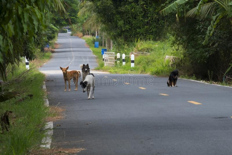 Molti cani del senzatetto sulla strada fotografie stock