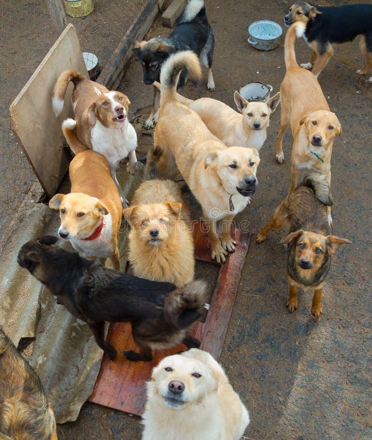 Molti cani esterni immagine stock