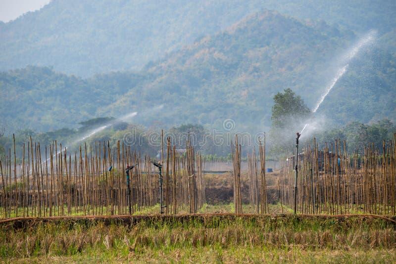 Molti cavoli verdi nell'agricoltura sistema a Phutabberk Phet immagine stock libera da diritti
