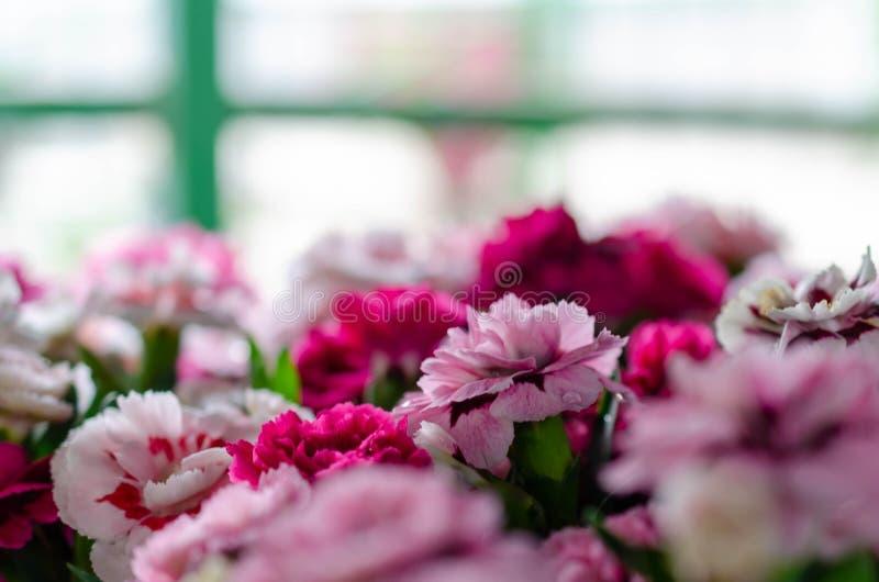 Molti colori differenti dei fiori di estate immagini stock