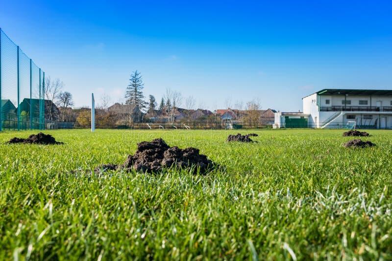 Molti cumuli di terra sollevati dalla talpa/monticelli della talpa sul campo di calcio di calcio fotografia stock