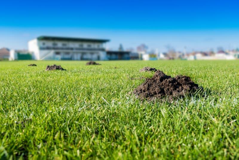 Molti cumuli di terra sollevati dalla talpa/monticelli della talpa sul campo di calcio di calcio immagine stock